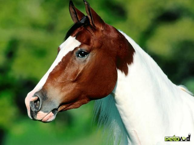 Что нужно знать перед покупкой лошади