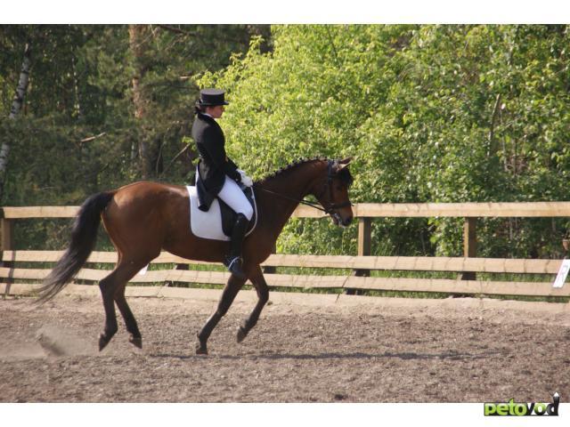 Правильный выбор КСК: здоровая лошадь - довольный хозяин.