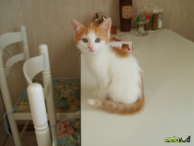 Кошка.  Беспородные и метисы .  Отдам в дар в Москве.