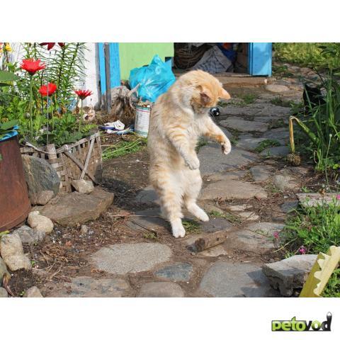 Кошки в движении