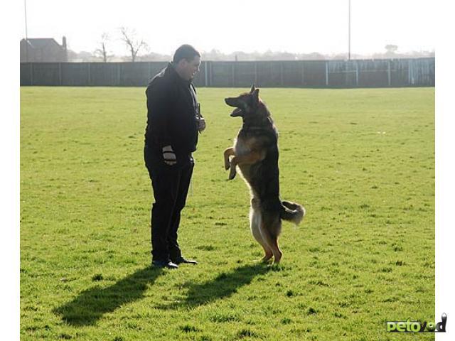 такое дрессировочные центры для собак в спб придать