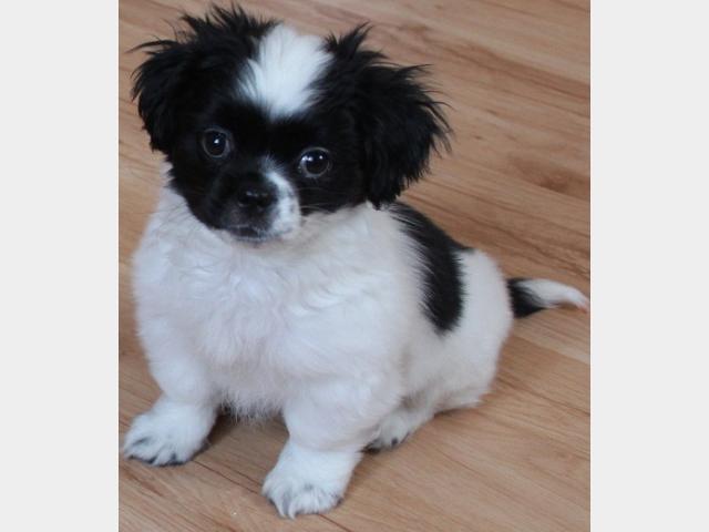 Благотворительная картотека потерянных и найденных собак и