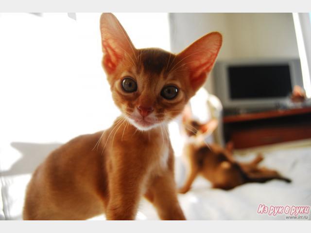 http://images.petovod.ru/2013/01/24/135903351071.jpg