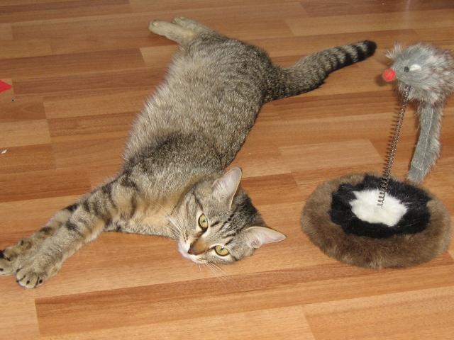 Фото котов в домашних условиях 35