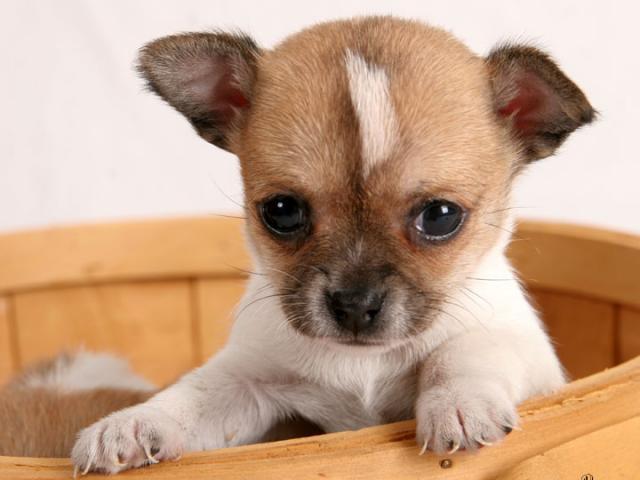 Собака в дар москва частные объявления сайты где можно дать объявление о продаже мёда