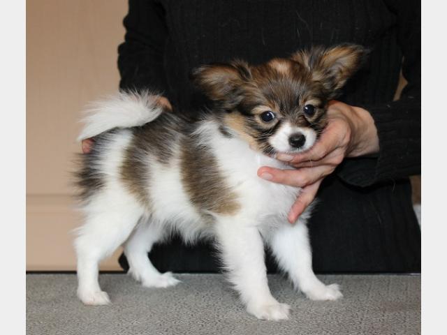 Купить Собачку В Минске