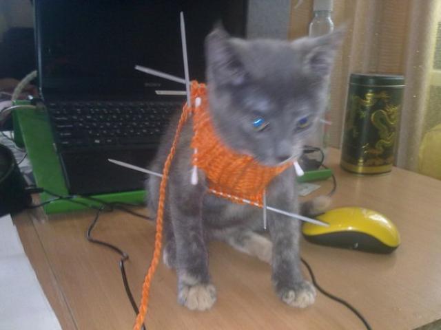 Кошка русская голубая отдам в дар в