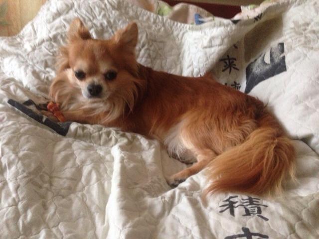 мини собаки в орле: