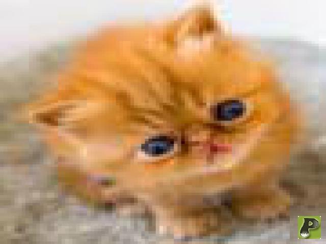 Маленький котенок в доме, с чего начать воспитание.
