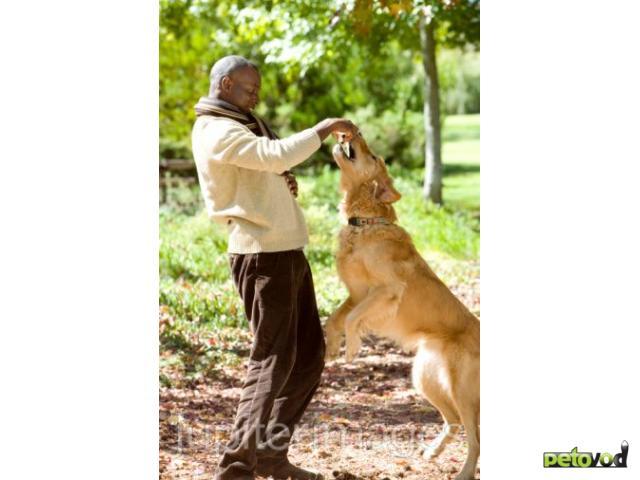 Как отучить собаку прыгать на хозяина или других людей.