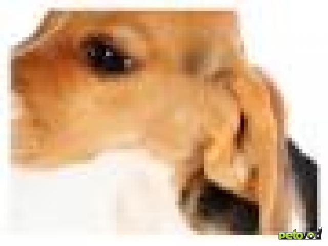 Гематома ушной раковины