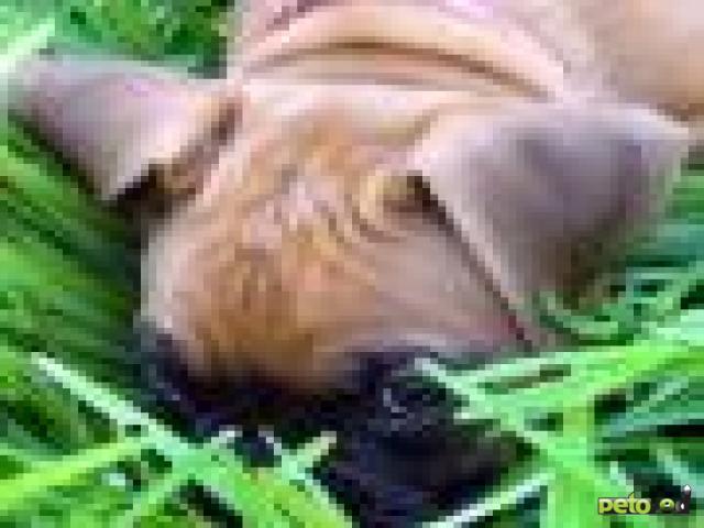Особенности пищеварения у собак и кошек