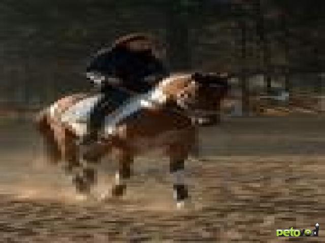 Верховая езда для новичка