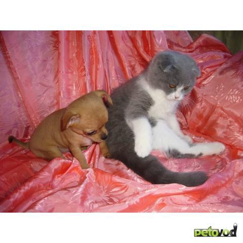 Собака + кошка