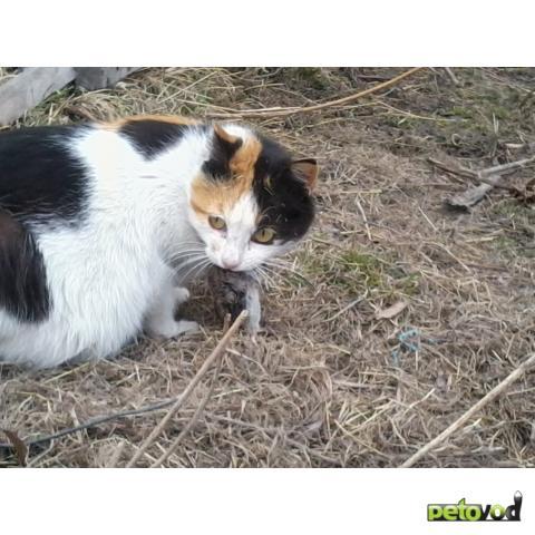 кошки породы ловят мышей