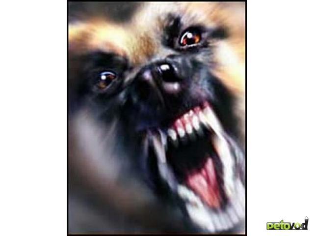 Как избежать нападения собаки?