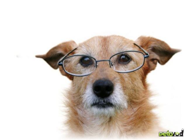Катаракта, рак, сердце: проблемы старых собак
