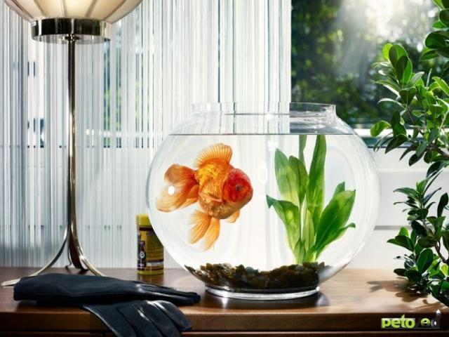 Содержание карповых рыб в домашних условиях.