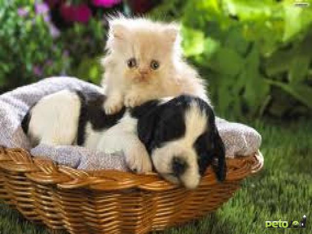 Могут ли кошка и собака стать друзьями?