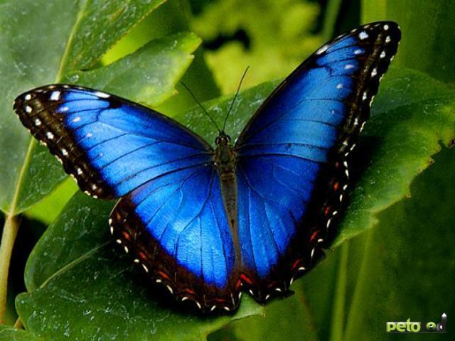 Бабочки стали «Осколками лета»