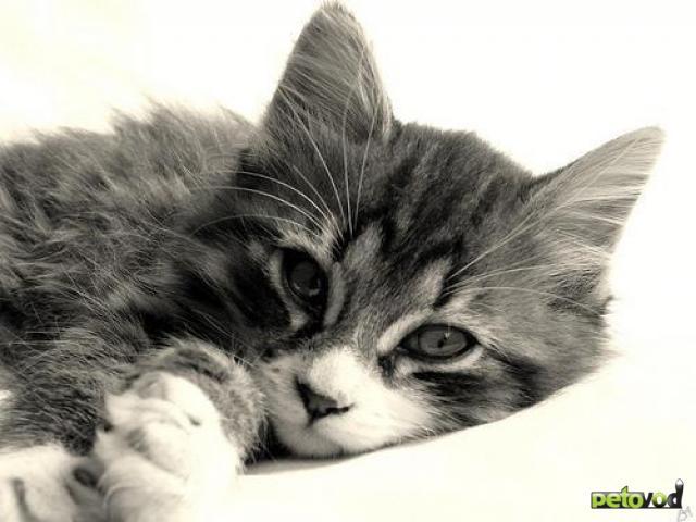 Кошки-метисы – долой отсутствие породы!