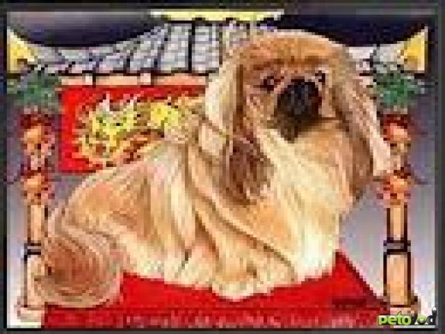 Занимательная история декоративных собак
