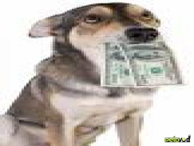 Сколько стоит щенок или взрослая собака?