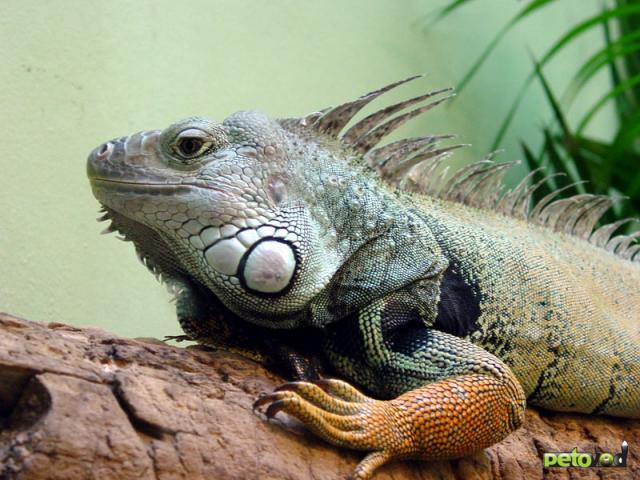 Рептилии в вашей жизни.