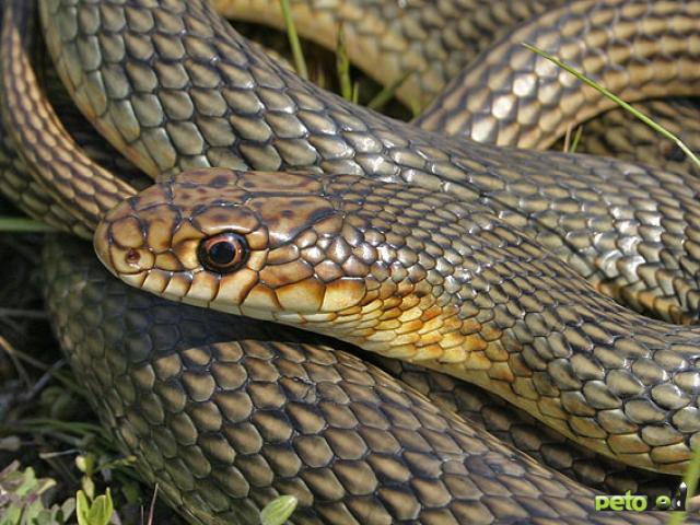 Содержание змей в домашних условиях.