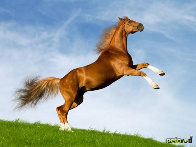 Покупка или аренда лошади. Быть или не быть?