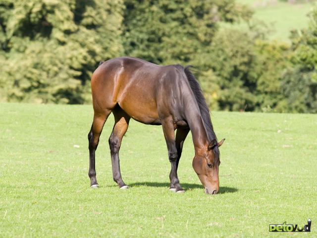 Питание лошади - это целая наука.