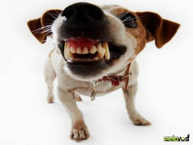 Как правильно ухаживать за зубами собаки