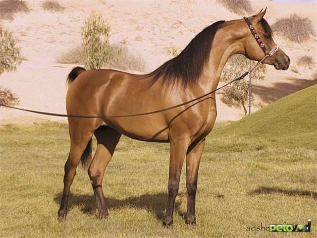 Конституция и экстерьер лошади
