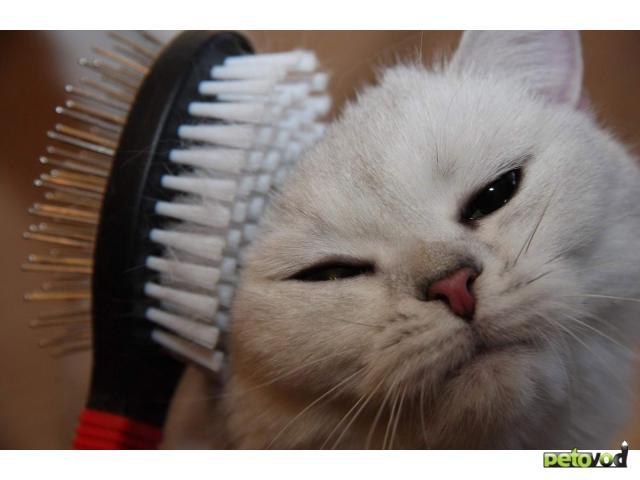 Как правильно ухаживать за шерстью кошки