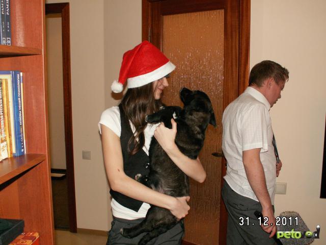 В дар отдам собаку в хорошие руки