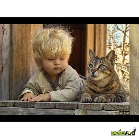 Кошки с детьми