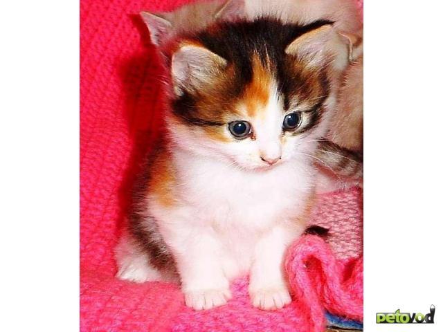 беспородные котята фото