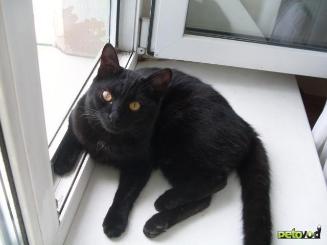 Пропал черный кот москва
