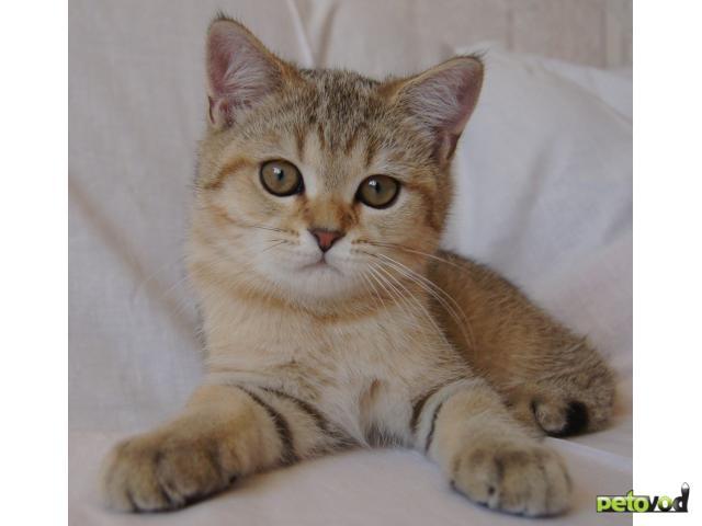 Фото котят и кошек  Кот кошка и котята