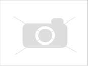 Собака. Немецкий шпиц карликовый (померанский). Вязка в Перми