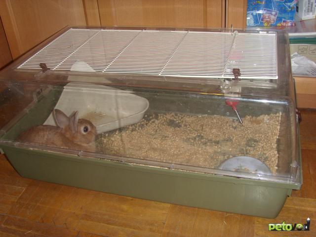 Продаю: Отдам карликовую кроличку за символическую цену фото2