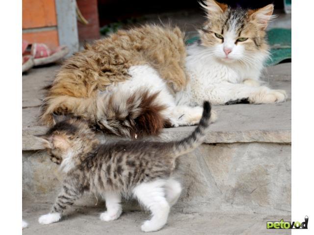 Отдам в дар: Очаровательные котята ищут хозяев фото2
