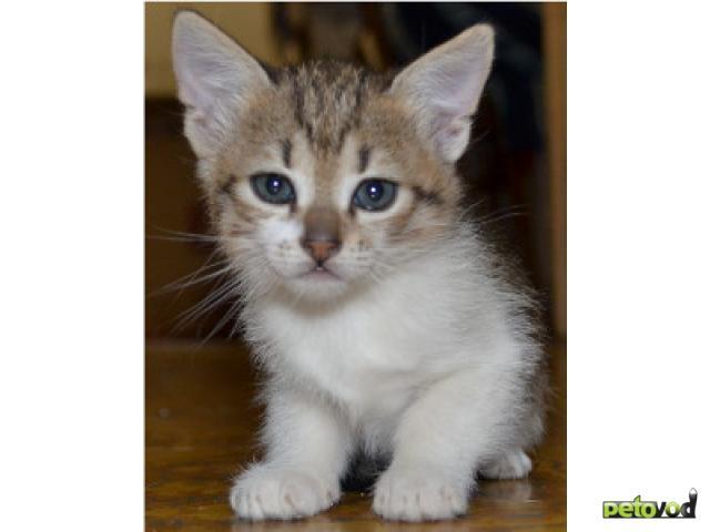 Отдам в дар: Очаровательные котята ждут своих добрых хозяев фото3