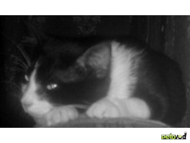 Потерялся/Нашелся: ПРОПАЛ любимый кот, Москва, улАрхитектора Власова фото2