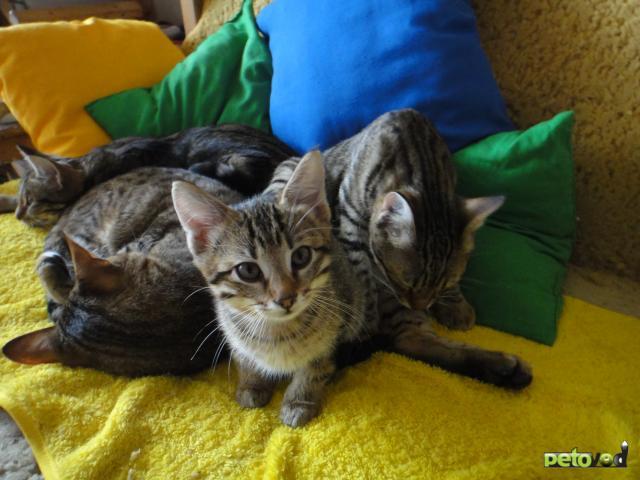 Отдам в дар: Отдам в добрые руки взрослых кошек фото3
