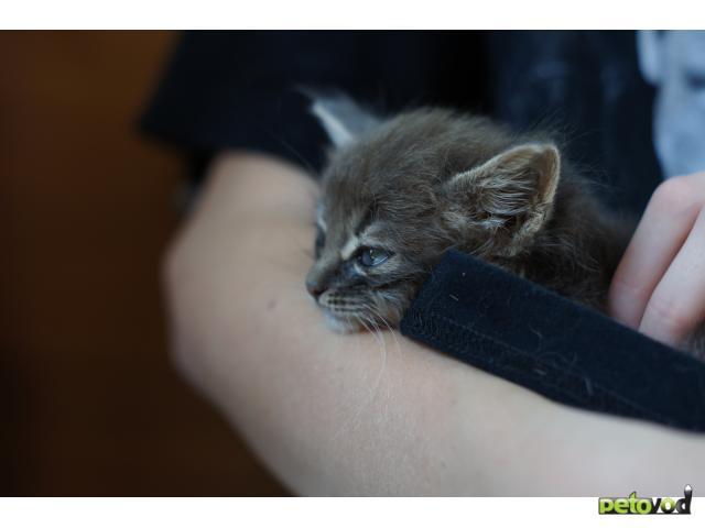 Отдам в дар: Отдам в хорошие руки котенка фото2