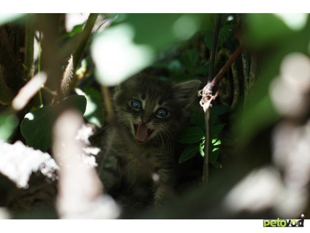 Отдам в дар: Отдам в хорошие руки котенка фото3