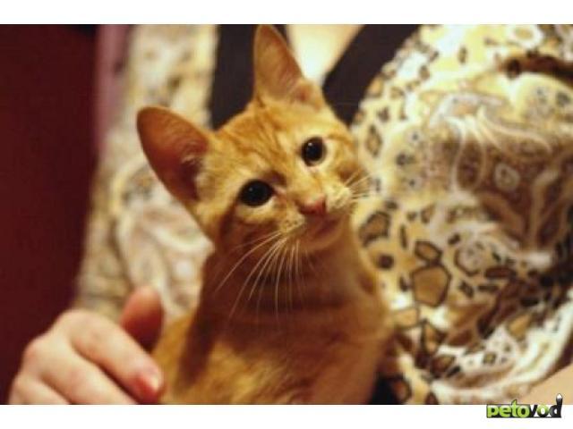 Отдам в дар: Отдам умного и ласкового котенка фото2