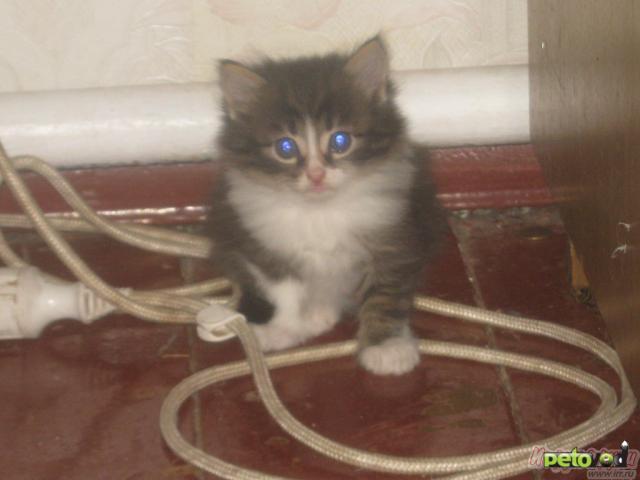 Отдам в дар: Отдам котят в добрые руки фото4