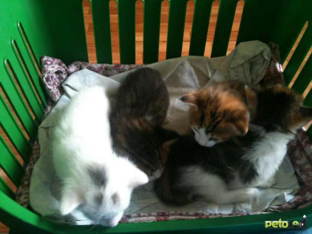 Отдам в дар: Отдадим котят в хорошие руки фото2